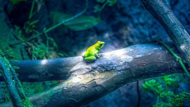 フィジーク目指して一歩を踏み出して見えた重要な真実3つ【井の中の蛙になるな】
